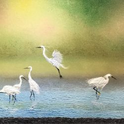 SOLD <BR> 成群白鹭嘻绿波 <br>  Dancing with Snowy Egret <br> 140 x 56cm <br> Oil on Canvas <br>  2018